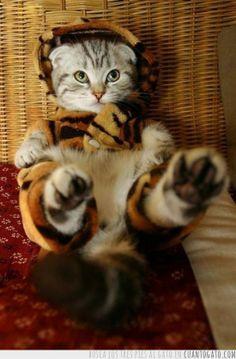Un felino disfrazado de felino, felinception!