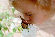 top 10 most popular flowers hydrangea  most popular