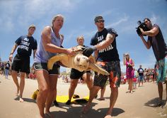 Volunteers from the Karen Beasley Sea Turtle Rescue and Rehabilitation Center released a loggerhead sea turtle back into the ocean in Surf C...