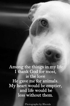 AMEN, so, so true!  I have a tender heart for animals that He blessed me with to give them love as we were commanded to do. ❤❤