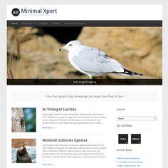 Minimal Xpert Free WordPress Theme, or this for GoodPhoto.org