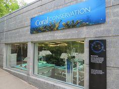 PPG Aquarium - Coral Conservation Exhibit
