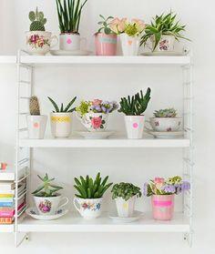 Como fazer suas plantas durarem