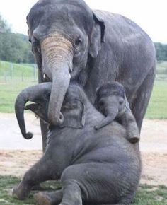 Mami. Elephants love and care for their babies forever.