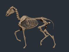 Horse_Skele_1.jpg