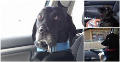 Check out these hilarious images of dogs realizing they are going to the vet