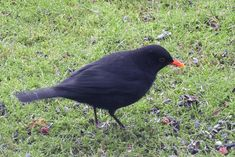Rajakaamera Bird, Animals, Animales, Animaux, Birds, Animal, Birdwatching, Animais