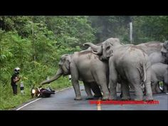 This Is Why You NEVER Ride A Motorbike Past A Herd Of Elephants. - http://www.sqba.co/videos/this-is-why-you-never-ride-a-motorbike-past-a-herd-of-elephants/