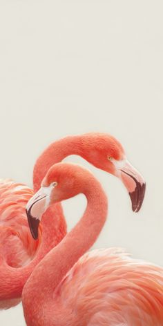 FLAMINGOS by Monika Strigel Art Print by Monika Strigel | Society6