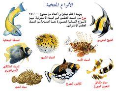 انواع الاسماك - بحث Google Types Of Fish, Animals, Animaux, Animal, Animales, Animais