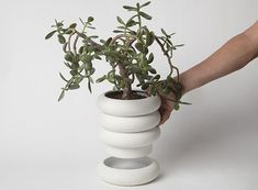 Do you love these Power Planters by Chen Chen & Kai Williams because their own saucers are integrated into the design or because they remind you of the Stay Puft Marshmallow Man's legs? I…