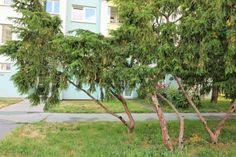 #продажанедвижимости #всловакии #братислава #квартиры Адрес: 851 03 Bratislava, Petržalka, Mlynarovičova. Двухкомнатная квартира на продажу, ул. Млинаровичова (Mlynarovičova), район Петржалка (Petržalka), Братислава, Словакия. Квартира площадью 54,46 м2 + 3 м2 лоджия + 1 м2 кладовая, панель, этаж 11 из 14, лифт, состоит... Подробнее: Янина Зборовская; тел: +421 903 407 775; mail@realty-slovakia.ru. Arch, Outdoor Structures, Garden, Plants, Longbow, Garten, Lawn And Garden, Gardens, Plant