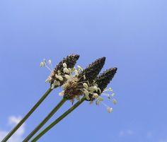Operación bikini: adelgazar con estas 5 plantas saciantes