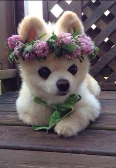 Cute Baby Animals Images Free against Cute Animals Wallpaper For Android Phone Cute Puppies, Dogs And Puppies, Dalmatian Puppies, Samoyed Dogs, Baby Puppies, Animals And Pets, Funny Animals, Animal Puns, Animals Images