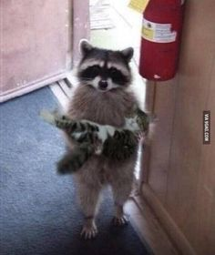 Excuse me, is this your cat?