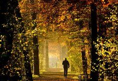 Alemães aproveitam a manhã para caminhar na floresta de Eilenriede, Hannover. Apesar do outono ameno, previsões afirmam que haverá mudança no tempo nos próximos dias (Foto: Julian Stratenschulte/AP) - http://epoca.globo.com/tempo/fotos/2014/11/fotos-do-dia-17-de-novembro-de-2014.html