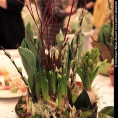 Les bulbes de printemps fleurissent la maison en hiver (Dossiers) Asparagus, Vegetables, Spring Bulbs, Fall, Walk In, Plants, Homes, Lawn And Garden, Studs