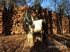 Gypsy Horse, Firewood, Horses, Wall Art, Animals, Woodburning, Animales, Animaux, Animal