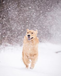 Jaxson running through the snow