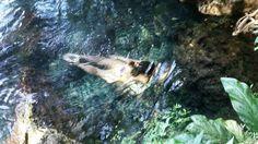 Somos uno con el todo... El todo esta en uno.  #rivermermaid #forestfairy #freedom #mermaids #river #manantial #water #intothewild #hippie #naturewisdom #nature #pachamama #laterapia #puertorico #boriken #swim #meditation #medicinanatural #visualization #mantra #conexion #cocreate #canalizacion #pure #happykid #happiness by prismadelsol