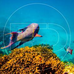 Un día volveré a dejar todo atrás y empezare la huida. #subacuatic #underwaterphotography #underwater #photography #documentary #scubadiving #coralreef #fish #wildlife #discovery #travel #outdoors