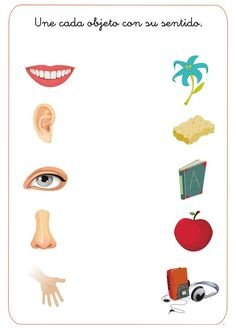match 5 senses worksheet for kids (5)
