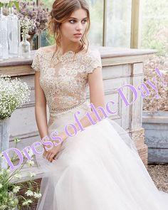 """Dress of the Day!! 💗🥂💍Come see this stunning illusion bateau neckline, aline tulle wedding dress at Molle Bridals. Place your order now to make sure your dress arrives on time for your wedding day! www.MolleBridals.com  561-775-6111 💖 #engaged #wedding #bride #love #weddingdresses #jupiterflorida #palmbeachgardens #stuart  #portstlucie #jensenbeach #westpalmbeach #fortlauderdale #bocaraton #coralgables #miami #boyntonbeach  #dresses #loveyourself #love #TagsForLikes  #follow #cute…"