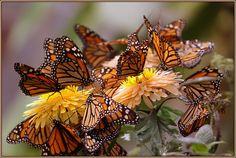 mariposas - little wings von uwe begoihn