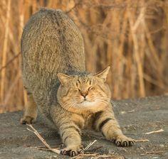 http://www.muyinteresante.com.mx/muy-vision/16/06/15/gatos-caras-japon-fotografia.html