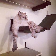 Stylish Cat Shelf w/ Stretched Fabric Raceway Hammock / Cat Bed
