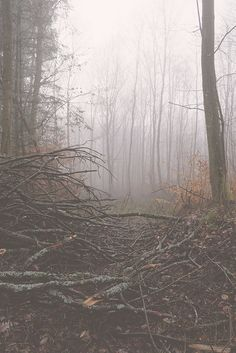 Oooohhh, I always love misty pictures (and mist/fog in real life). Beautiful World, Beautiful Places, Beautiful Pictures, Landscape Arquitecture, Nature Sauvage, Over The Garden Wall, Dark Forest, Misty Forest, Foggy Forest