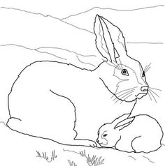 arctic hare baby and mother coloring page from hares category select from 24114 printable crafts