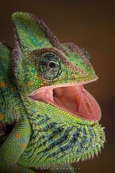 25 Most Beautiful Macro Photography examples and 10 Tips for Beginners. Read full article: http://webneel.com/webneel/blog/25-most-beautiful-macro-photography-your-inspiration-10-tips-beginners | more http://webneel.com/wild-life | Follow us www.pinterest.com/webneel