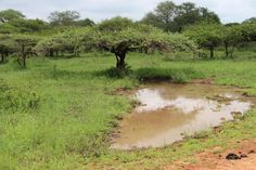 Mud pool Game Reserve, Mud, Country Roads, Nature, Naturaleza, Nature Illustration, Off Grid, Natural