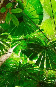 Tropica Vibe : Palms