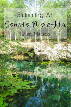 Swimming at Cenote Nicte-Ha in Tulum, Mexico -> Are you traveling to Tulum? I recommend swimming at the beautiful, lesser-known and serene Cenote Nicte-Ha! Read about my experiences and get some photo inspiration on my blog.