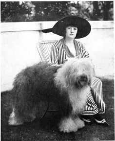 This 1914 publicity photo provided by the Westminster Kennel Club shows the 1914 Westminster Best In Show winner, Slumber. Sheepdogs have been recognized by the American Kennel Club since the late 1800's and won best in show at Westminster in 1914 and 1975. Breeders in the USA and England are concerned about the drop in the number of purebred sheepdog puppies registered in the two countries each year, as more owners choose smaller dogs like pocket pets and designer puppies. (AP Photo)