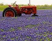 Tractor in Bluebonnets