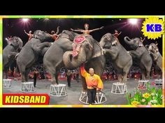 Circus For Kids - Animals Circus - Beer, Tiger, Elephant circus. Preschool Circus, Animals For Kids, Elephant, Youtube, Videos, Movie Posters, Beer, Root Beer, Ale