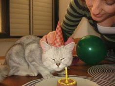 A birthday cake for your cat So its just wet cat food topped on