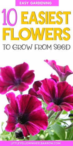 Flower gardening for beginners. Use this list of easy flowers to grow from seed to give you lots of ideas for easy flowers to plant in your garden. Planting Flowers From Seeds, Growing Flowers, Easiest Flowers To Grow, Back Garden Design, Starting A Garden, Seed Starting, Wildflower Seeds, Colorful Plants, Growing Seeds
