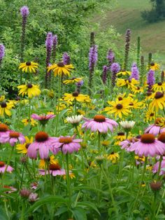 I especially like the tall purple spiky liatris and fully intend to plant more in (Liatris spicata,echinacea purpurea,rudbeckia. Prairie Garden, Garden Cottage, Beautiful Gardens, Beautiful Flowers, Landscape Design, Garden Design, Black Eyed Susan, Plantar, Parcs