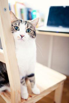 photogenic felines | (Anastasia Abramova)
