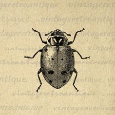 Digital Printable Ladybug Graphic Illustration Image Insect Bug Download Vintage Clip Art for Transfers etc HQ 300dpi No.3793