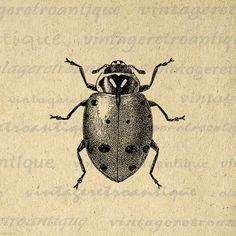 Digital Printable Ladybug Graphic Illustration Image Insect Bug Download Vintage Clip Art for Transfers etc HQ 300dpi No.3793