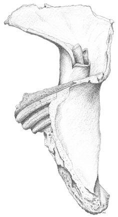 Peter Tugwell. Weathered Shell.  #sketch #sketching #draw #drawing #pencil  #galleryart #arte #illustration #artwork #artist #art #fineart #traditionalart #creative #creativity #progress Led Pencils, Pencil And Paper, Cockatoo, Artist Art, Traditional Art, Sketching, Art Gallery, Shell, Creativity