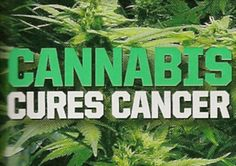 Video: La marihuana lleva a las células cancerígenas al suicidio