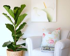 You may recall my recent post about fiddle leaf fig trees and how desperately I wanted one. Well I am pleased to report that not only have I tracked down the elusive fiddle leaf fig tree (aka ficus lyrata) in Dubai but I also completed a little DIY project to house it. Finding this baby proved to be somewhat of a mission but, not one to give up easily, I delved into the depths of beyond and came back victorious. Ok, so I just drove out to the Al Aweer / Warsan area, but trust me, it was ...