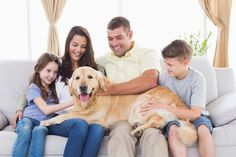 People-Friendly Dog with Family | Pet Quest --- The family lap dog.