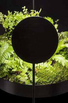 sculptural planter and plant lighting